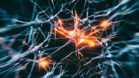 Nerve cells attacked by immune system